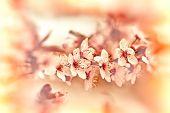 Beautiful tree flowering