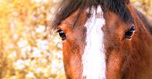 Horse Close-up On A Background Of Flowering Trees