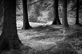 Forest Edge in Peak District
