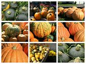 Collage of fall squashes