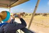 Постер, плакат: Woman on african wildlife safari