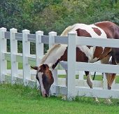 grass is greener on the other side 2
