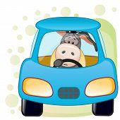 Donkey In A Car
