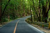 Asphalt Road At Mangrove Forest