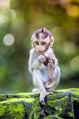 picture of baby-monkey  - Little baby - JPG