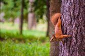 foto of cunning  - most cunning squirrel steals food upside down - JPG