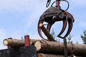 image of logging truck  - Jaws of a crane loading logs onto a truck - JPG