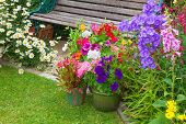 pic of digitalis  - Cottage garden with wooden bench and flowers in containers - JPG
