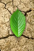 stock photo of mud  - the green leaf in dried cracked mud - JPG