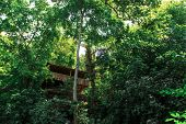 pic of observed  - Bottom view of observation terrace among big trees in forest in Harbiye Antakya - JPG