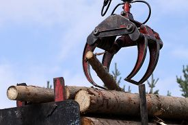 stock photo of logging truck  - Jaws of a crane loading logs onto a truck - JPG