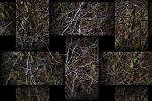 Thorns12 Weave