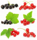 collection of black and red currant fruits isolated on white background