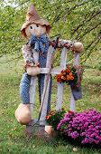 Autumn Scarecrow with picket fence, garden rake, and colorful mums. Shallow dof with trees in the background.