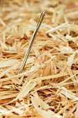 Needle in a haystack.  Macro with shallow dof