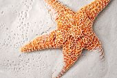 Beautiful orange starfish on wet sand.  Close-up with copy space.