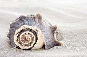 Beautiful seashell on white sand with copy space.  Macro with extremely shallow dof.
