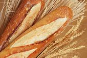 Freshly baked french baguettes with wheat spikes.  Macro with shallow dof.