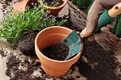 Gardeners hand in work glove with spade and dirt in clay pot.  Plants in background.  Close-up with