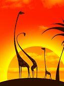 giraffe's family