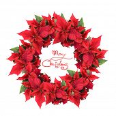 foto of christmas wreaths  - christmas wreath from poinsettia - JPG