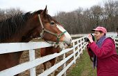 picture of clydesdale  - Three Clydesdale horses at fence having their picture taken by photographer - JPG