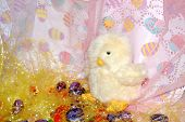 Easter Chick16