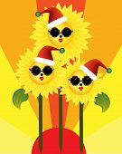 Merry Christmas from sunflowers in the sun