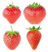 Collection Of Isolated Strawberries poster