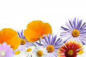flores sobre fondo blanco