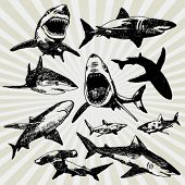 Set of Sharks Hand Drawn