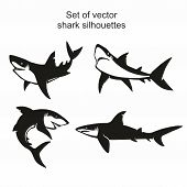 Set Of Four Vector Shark Silhouettes Isolated On White Background, Symbols, Icon, Design Elements.   poster