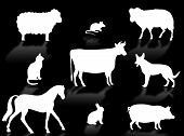 picture of animal silhouette  - Farm animals silhouettes with shadows on a white background - JPG