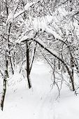 Footpath In Snow In Snowy Forest Of Timiryazevskiy Park Of Moscow City In Overcast Winter Day poster