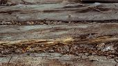 Wood Background. Old Wooden Wall. Old Wood. Old Wood Background. Weathered Wood Texture Closeup Phot poster