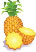 Vector illustration - ripe pineapples
