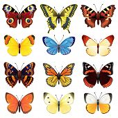 Vektor-Illustration - Schmetterling-Icon-set