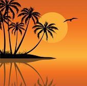 stock photo of tropical island  - Tropical Island with Palm Trees - JPG
