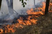 Fire In The Forest. Fire And Smoke In The Forest Litter. The Grass Is Burning In The Forest. Forest  poster