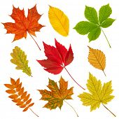 Various autumn leaves isolated on the white background.