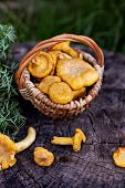 Mushrooms Chanterelle In The Basket poster