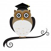 Graduating owl wearing a mortar board with tassel.