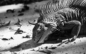 Iguana searching for food in black & white