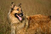 Adorable mixed breed collie dog