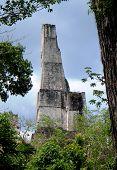 Tikal arranha-céu