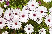 ganz weiße Blumen in einem Garten