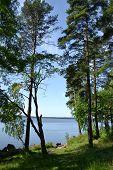 Lago e madeira pequena