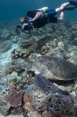 Diver Photographing Green Turtle