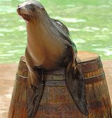 Seal on Barrel
