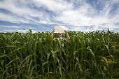 Man holding sign in Corn Field